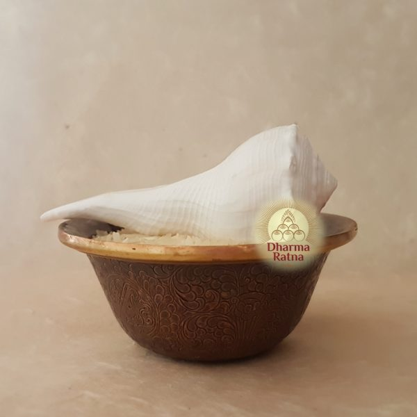 right-turning white conch shell